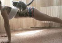 Котячі віджимання
