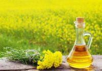 Що таке рапсова олія і де її застосовують – секрети вибору і зберігання